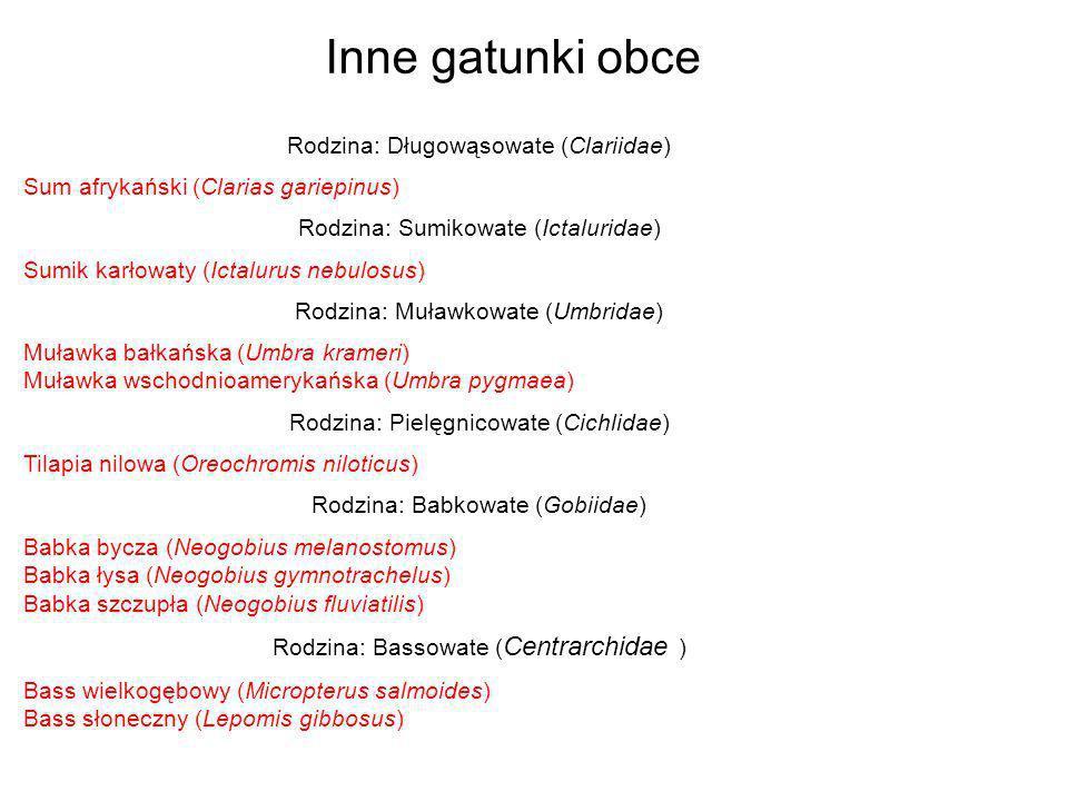Rodzina: Długowąsowate (Clariidae) Sum afrykański (Clarias gariepinus) Rodzina: Sumikowate (Ictaluridae) Sumik karłowaty (Ictalurus nebulosus) Rodzina