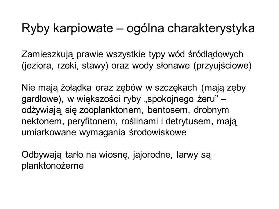 Głowacz białopłetwy (Cottus gobio) Głowacz pręgopłetwy (Cottus poecilopus) Rodzina: Głowaczowate (Cottidae) Ciernik (Gasterosteus aculeatus) Cierniczek (Pungitius pungitius) Rodzina: Ciernikowate (Gasterosteidae)