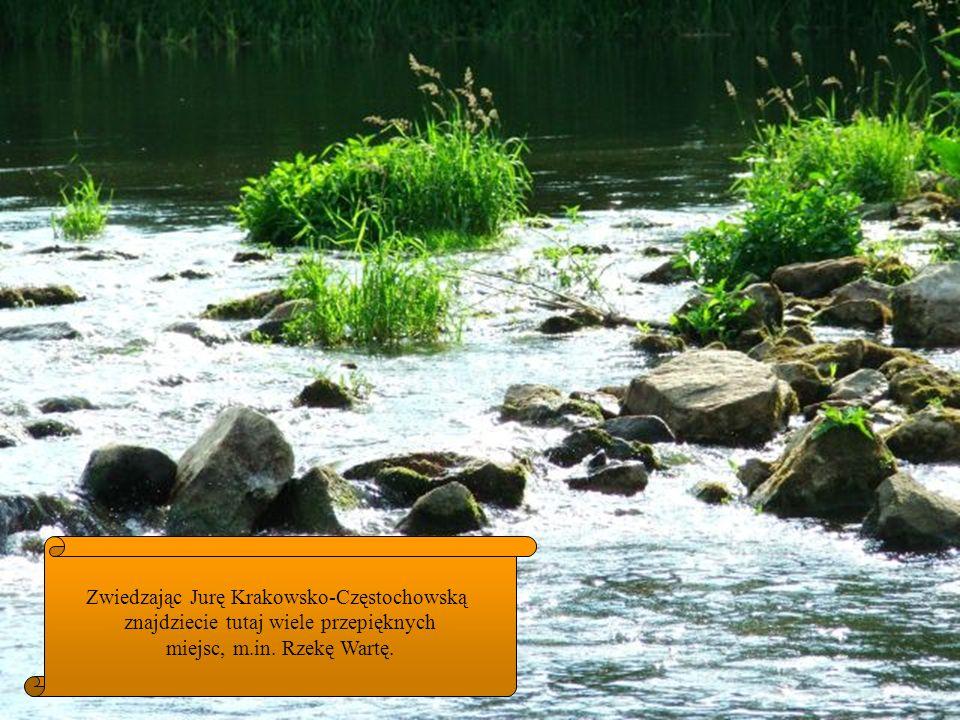 Zwiedzając Jurę Krakowsko-Częstochowską znajdziecie tutaj wiele przepięknych miejsc, m.in. Rzekę Wartę.