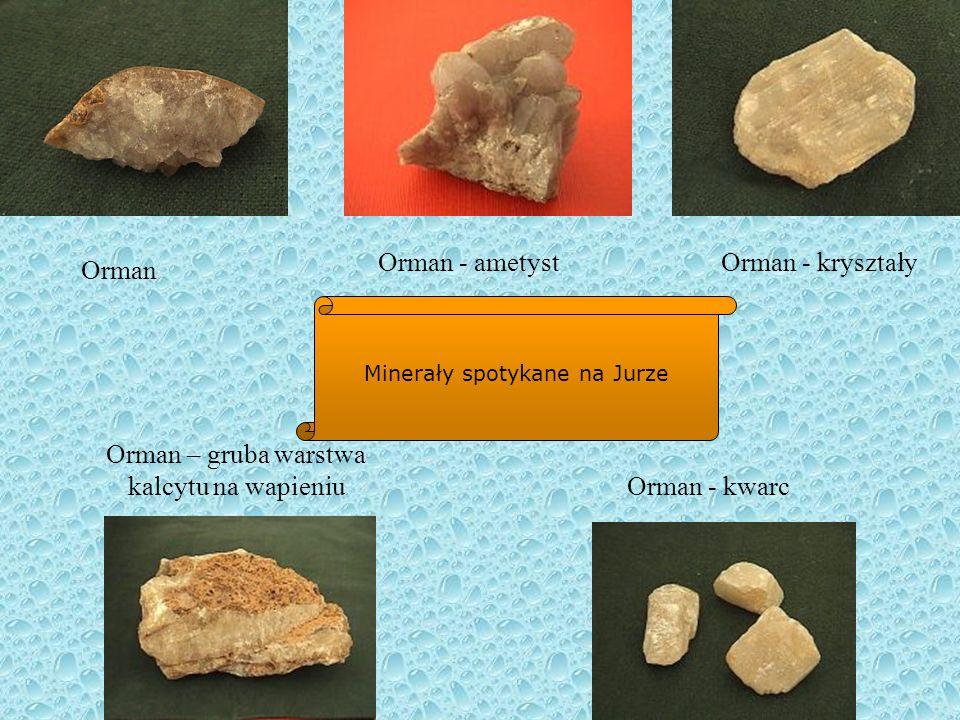 Muszle i kamienie z różnymi ozdobami wykonanymi przez naturę Muszla jurajskiego ramienionoga