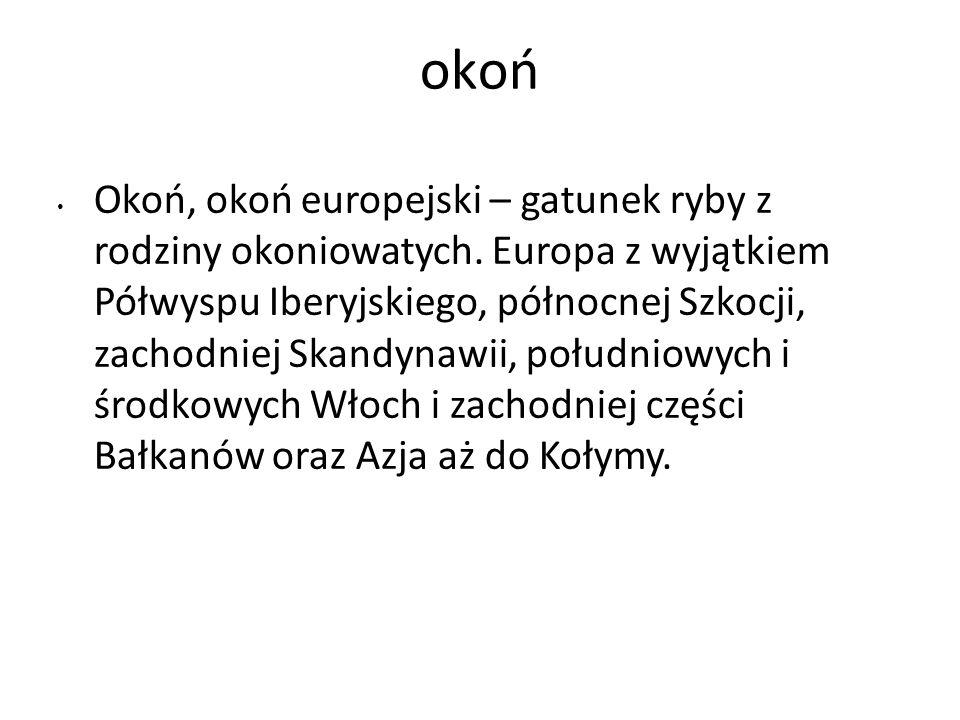 okoń Okoń, okoń europejski – gatunek ryby z rodziny okoniowatych. Europa z wyjątkiem Półwyspu Iberyjskiego, północnej Szkocji, zachodniej Skandynawii,
