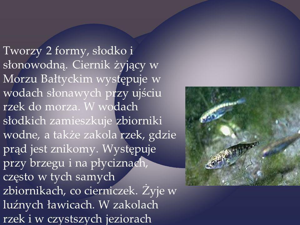 Tworzy 2 formy, słodko i słonowodną. Ciernik żyjący w Morzu Bałtyckim występuje w wodach słonawych przy ujściu rzek do morza. W wodach słodkich zamies