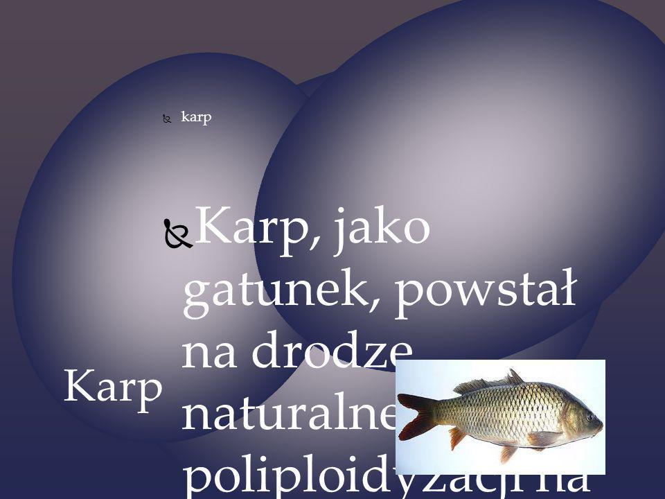 karp Karp, jako gatunek, powstał na drodze naturalnej poliploidyzacji na przełomie trzeciorzędu i czwartorzędu w okolicach Morza Kaspijskiego i wschod