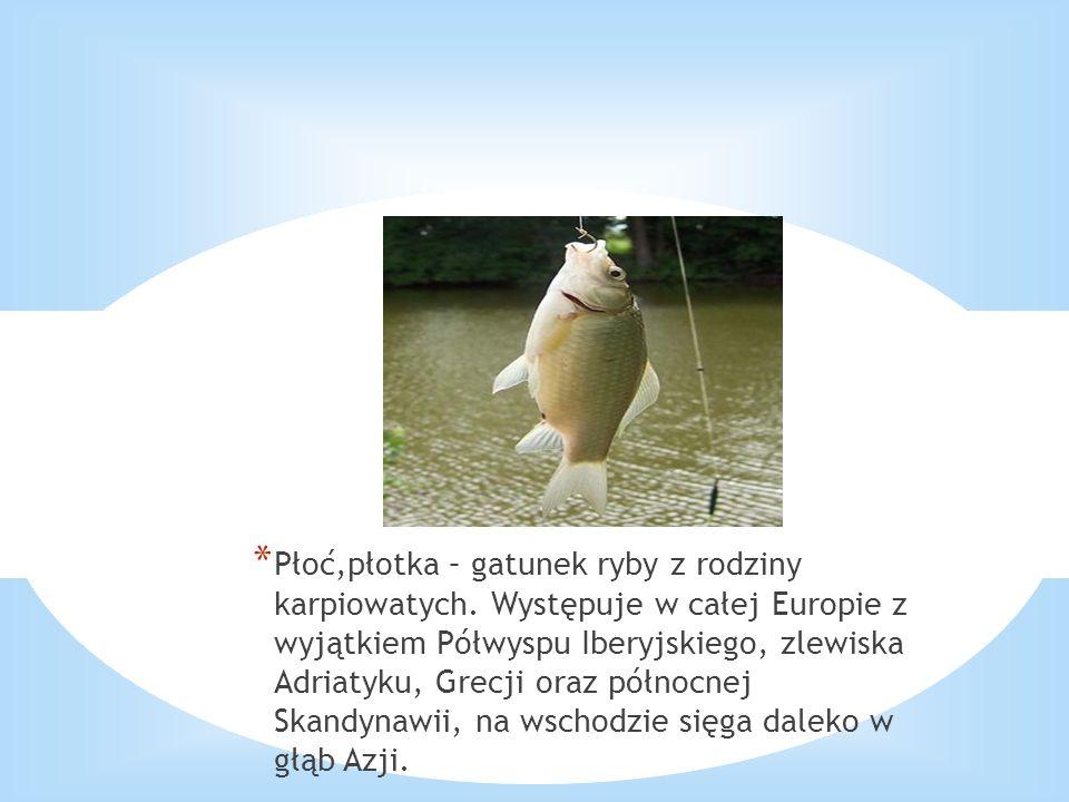 * Płoć,płotka – gatunek ryby z rodziny karpiowatych. Występuje w całej Europie z wyjątkiem Półwyspu Iberyjskiego, zlewiska Adriatyku, Grecji oraz półn