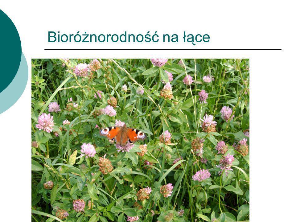 Bioróżnorodność na łące