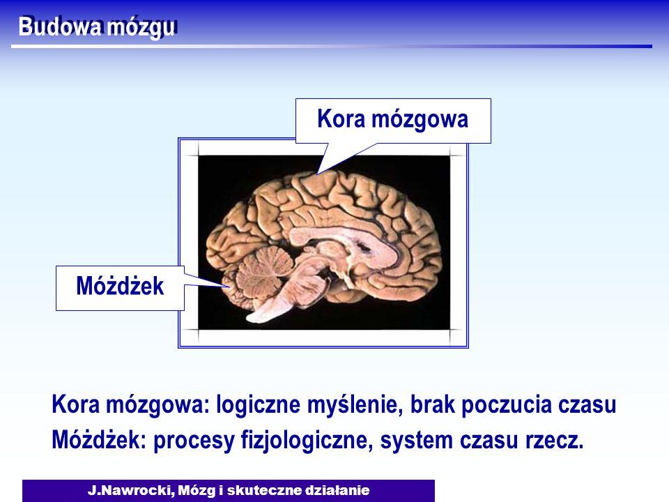 J.Nawrocki, Mózg i skuteczne działanie Budowa mózgu Móżdżek Kora mózgowa Kora mózgowa: logiczne myślenie, brak poczucia czasu Móżdżek: procesy fizjolo