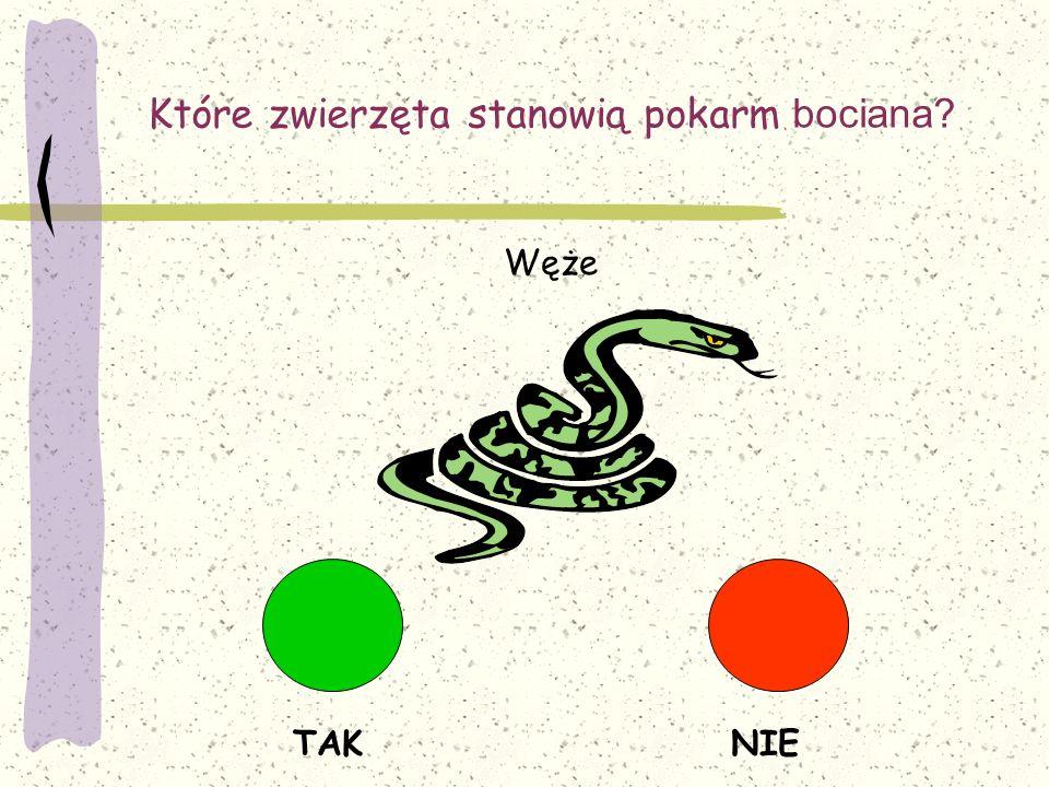 Które zwierzęta stanowią pokarm bociana? TAKNIE Węże