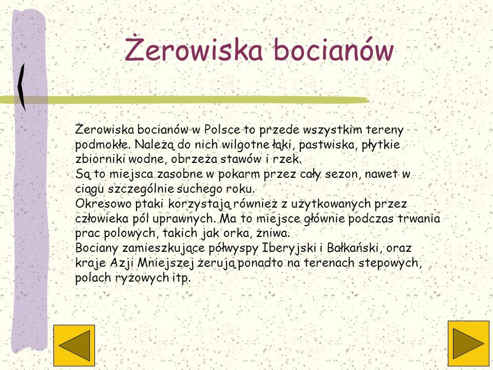 Żerowiska bocianów Żerowiska bocianów w Polsce to przede wszystkim tereny podmokłe. Należą do nich wilgotne łąki, pastwiska, płytkie zbiorniki wodne,