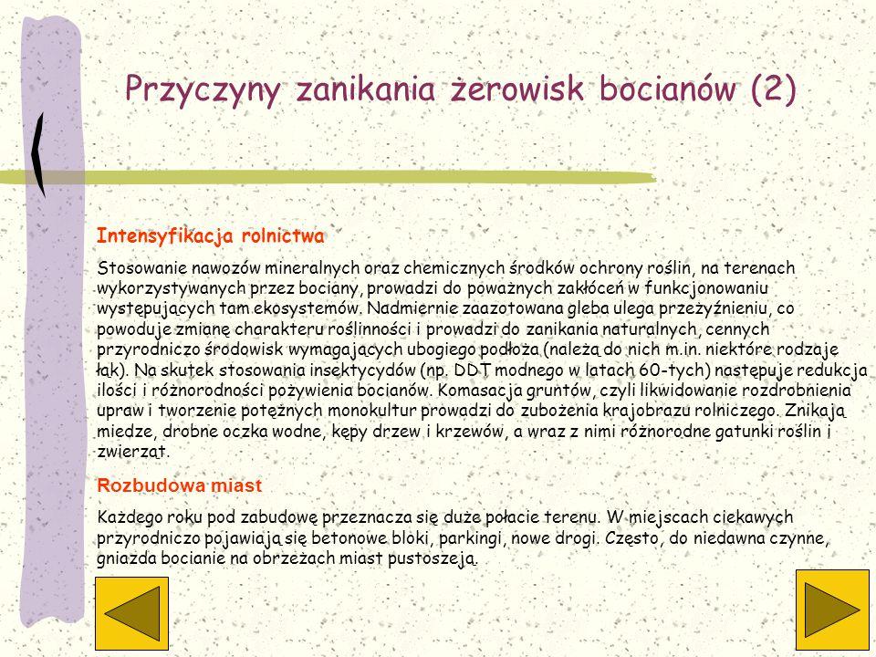 Przyczyny zanikania żerowisk bocianów (2) Intensyfikacja rolnictwa Stosowanie nawozów mineralnych oraz chemicznych środków ochrony roślin, na terenach