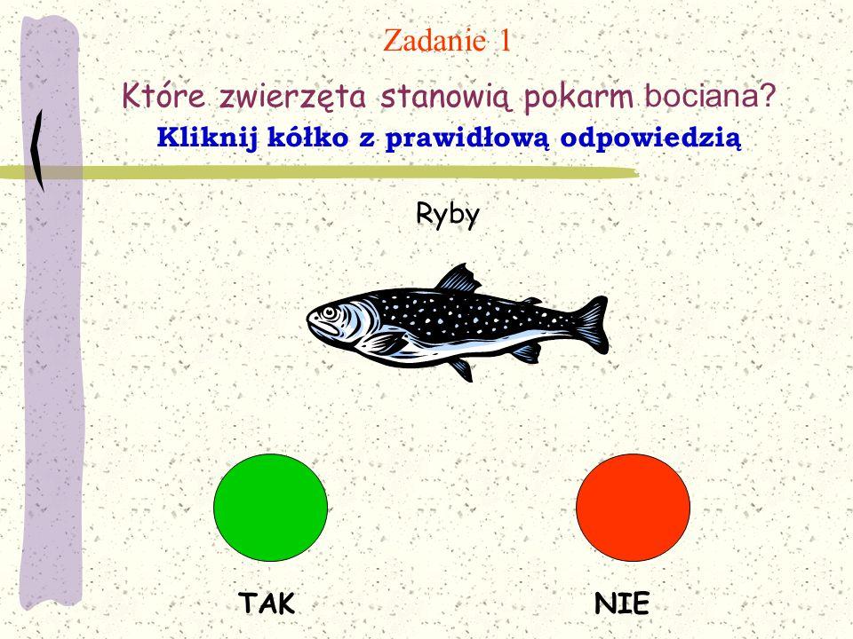 Zadanie 1 Które zwierzęta stanowią pokarm bociana? Kliknij kółko z prawidłową odpowiedzią TAKNIE Ryby