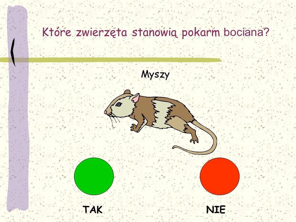 Które zwierzęta stanowią pokarm bociana? TAKNIE Myszy