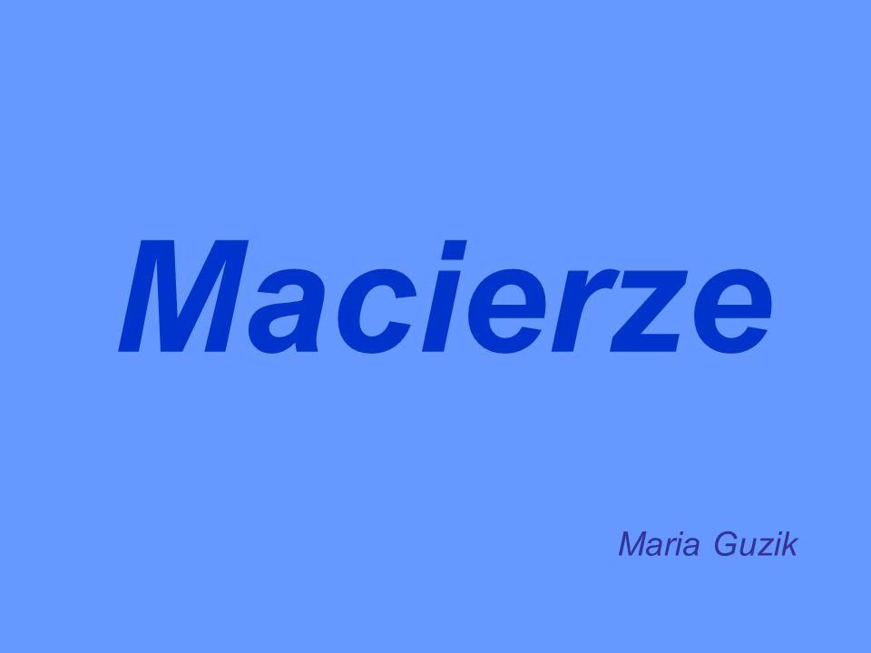 Macierze Maria Guzik