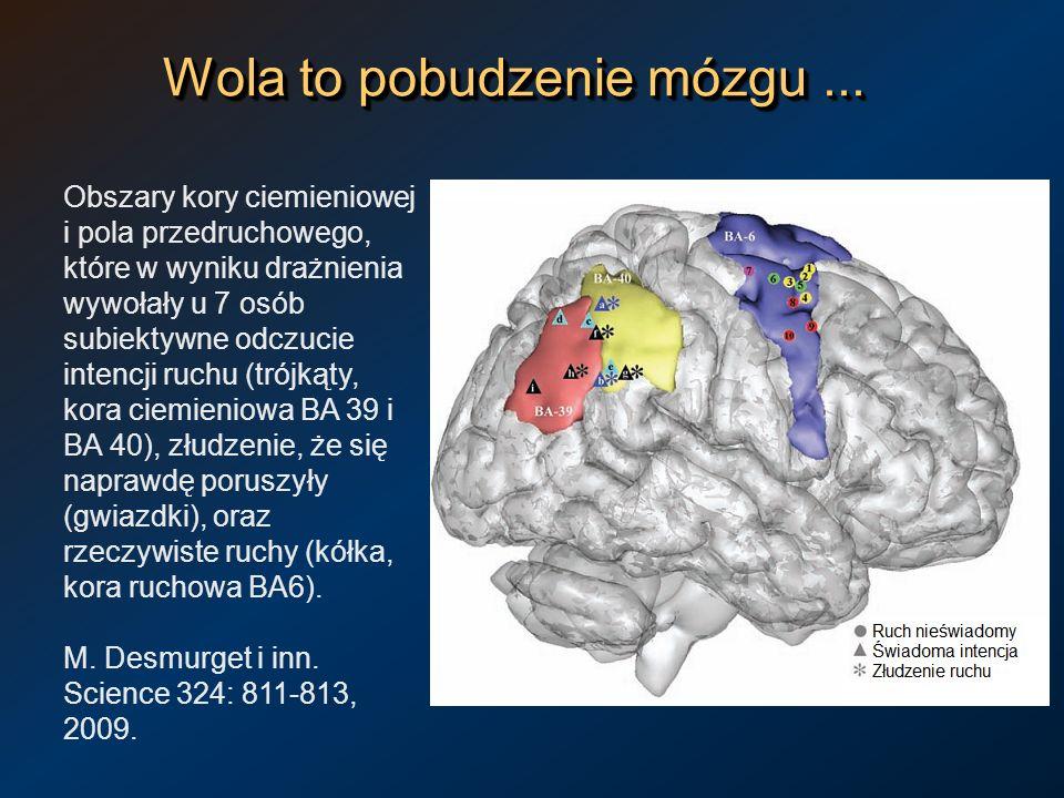 Wola to pobudzenie mózgu... Obszary kory ciemieniowej i pola przedruchowego, które w wyniku drażnienia wywołały u 7 osób subiektywne odczucie intencji