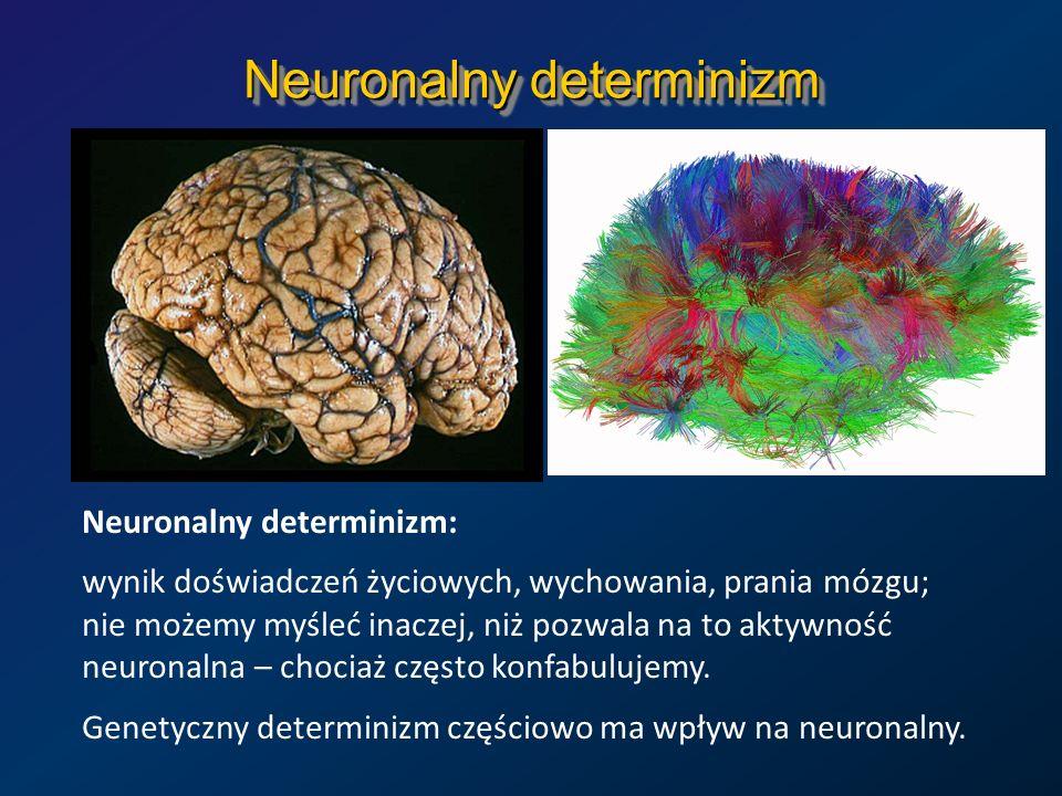 Neuronalny determinizm Neuronalny determinizm: wynik doświadczeń życiowych, wychowania, prania mózgu; nie możemy myśleć inaczej, niż pozwala na to akt