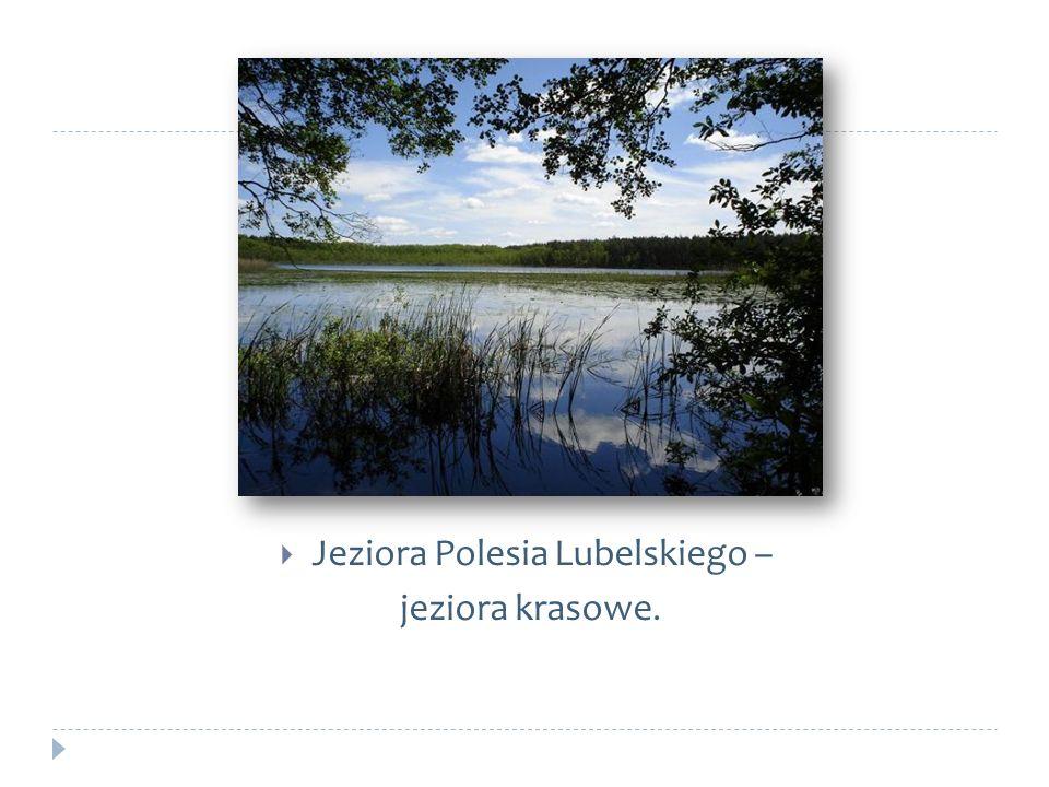 Jeziora Polesia Lubelskiego – jeziora krasowe.