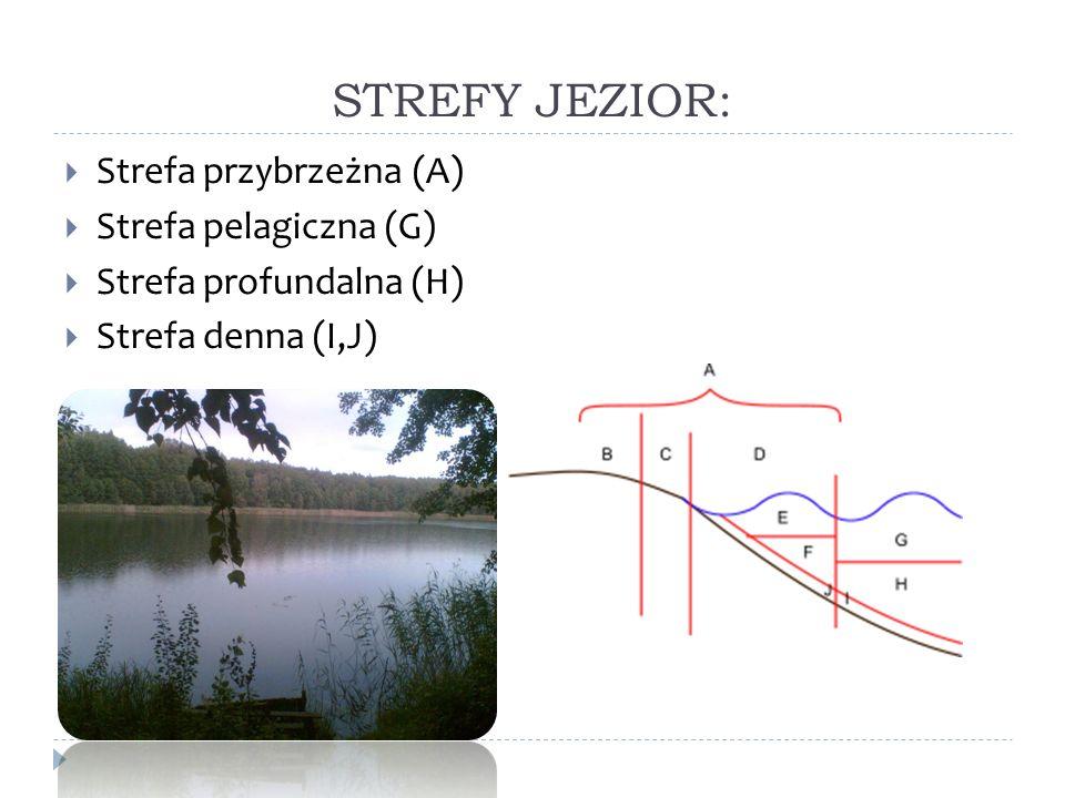 STREFY JEZIOR: Strefa przybrzeżna (A) Strefa pelagiczna (G) Strefa profundalna (H) Strefa denna (I,J)