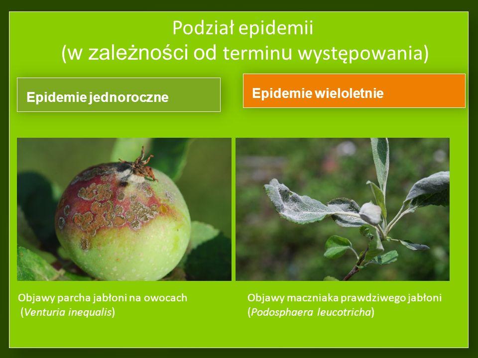 Podział epidemii (w zależności od odległości od źródła infekcji) Endemia – to trwała epidemia lokalna, zlokalizowana, nie mająca tendencji do rozszerz