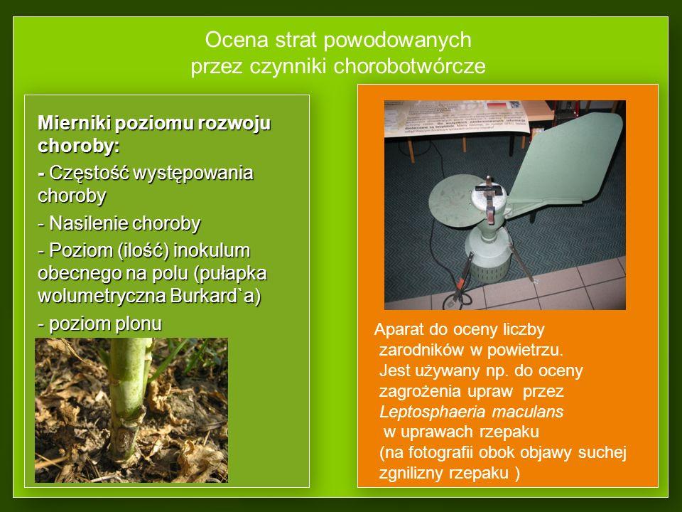 Podział epidemii cd. Brunatna zgnilizna owoców pestkowych Brunatna zgnilizna owoców pestkowych (Monilinia laxa)