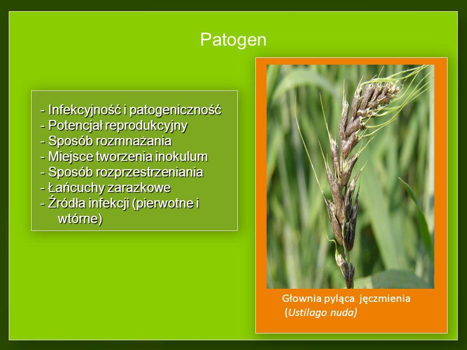 Patogen - Infekcyjność i patogeniczność - Potencjał reprodukcyjny - Sposób rozmnażania - Miejsce tworzenia inokulum - Sposób rozprzestrzeniania - Łańcuchy zarazkowe - Źródła infekcji (pierwotne i wtórne) Głownia pyląca jęczmienia (Ustilago nuda)