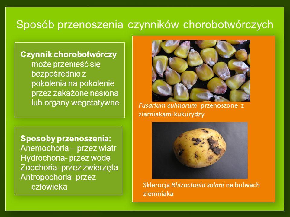 Ocena strat powodowanych przez czynniki chorobotwórcze Skala porażenia liści buraka cukrowego przez C.