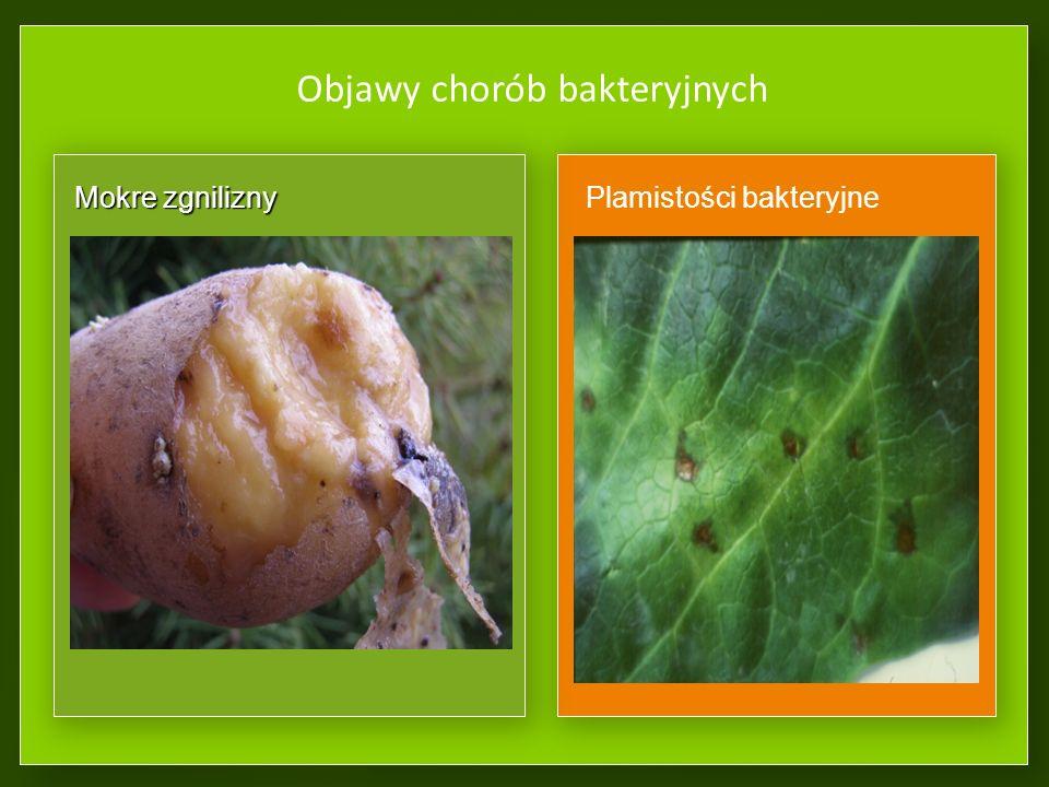 Bakteriozy – choroby powodowane przez bakterie Źródłem chorób bakteryjnych mogą być: Organy wegetatywneOrgany wegetatywne Rośliny wieloletnie, oziminyRośliny wieloletnie, oziminy Resztki roślinneResztki roślinne NasionaNasiona GlebaGleba OwadyOwady Bakterie mogą wnikać do roślin przez: ZranieniaZranienia Naturalne otworyNaturalne otwory Organy nie pokryte kutykuląOrgany nie pokryte kutykulą