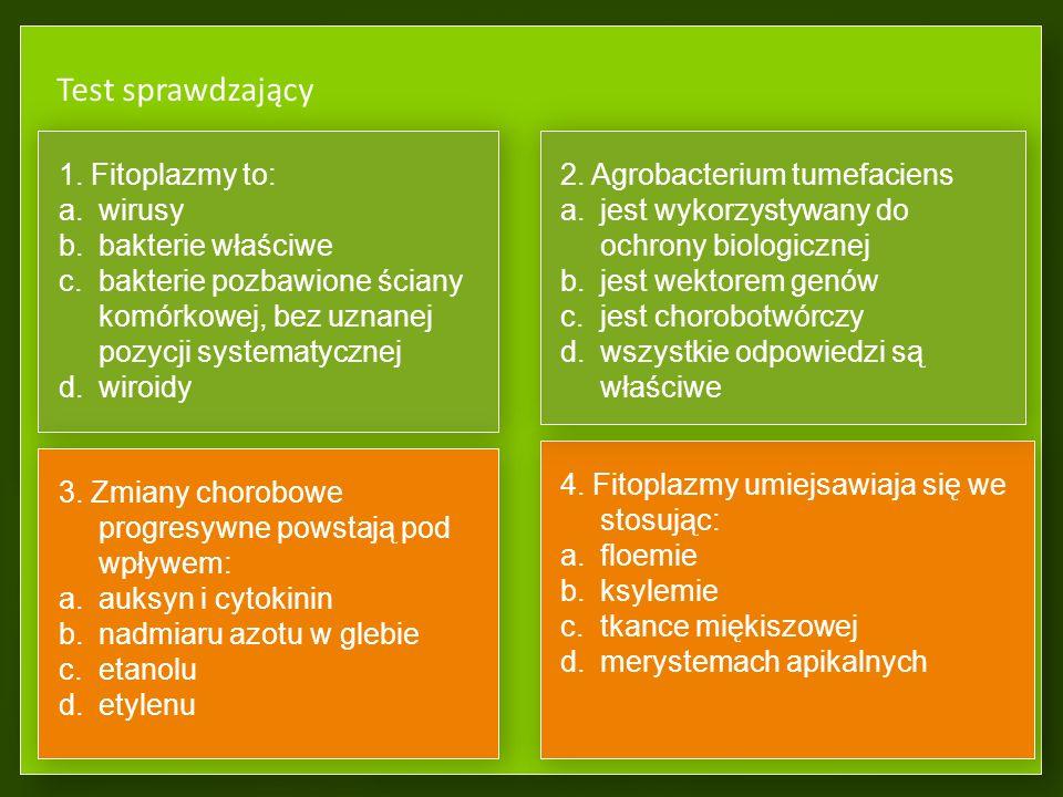 Objawy powodowane przez fitoplazmy Fitoplazmatyczna żółtaczka wiązu Objawy żółtaczki wiązu są niespecyficzne bardzo podobne do objawów holenderskiej choroby wiązu powodowanej przez grzyb Ophiostoma novo-ulmi.