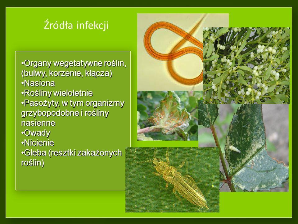 Źródła infekcji Organy wegetatywne roślin, (bulwy, korzenie, kłącza)Organy wegetatywne roślin, (bulwy, korzenie, kłącza) NasionaNasiona Rośliny wieloletnieRośliny wieloletnie Pasożyty, w tym organizmy grzybopodobne i rośliny nasiennePasożyty, w tym organizmy grzybopodobne i rośliny nasienne OwadyOwady NicienieNicienie Gleba (resztki zakażonych roślin)Gleba (resztki zakażonych roślin)