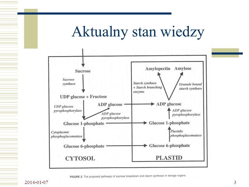 2014-01-07 4 Wielkość granulek skrobi ziemniaczanej genetycznie modyfikowanej S – standardowa; W - wysokoamylopektynowa