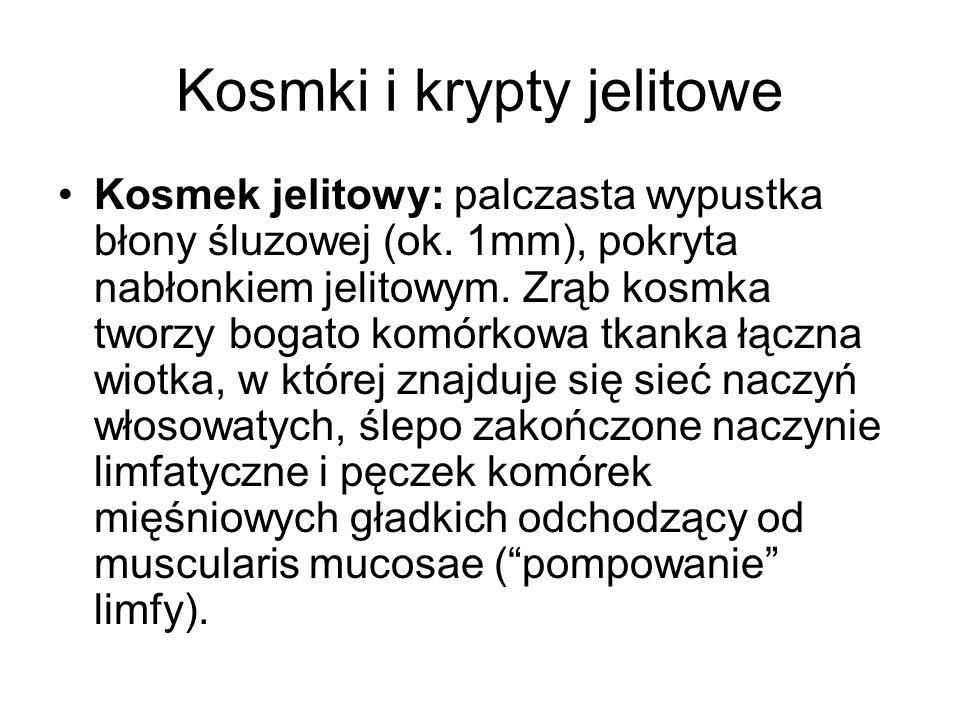 Kosmki i krypty jelitowe Kosmek jelitowy: palczasta wypustka błony śluzowej (ok.
