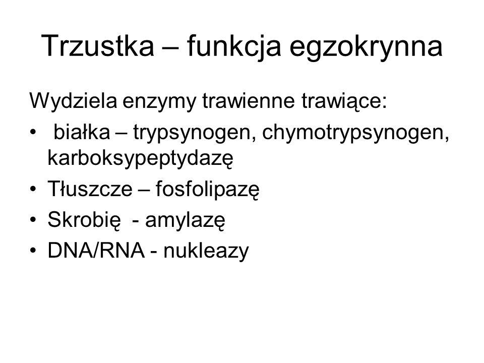 Trzustka – funkcja egzokrynna Wydziela enzymy trawienne trawiące: białka – trypsynogen, chymotrypsynogen, karboksypeptydazę Tłuszcze – fosfolipazę Skrobię - amylazę DNA/RNA - nukleazy