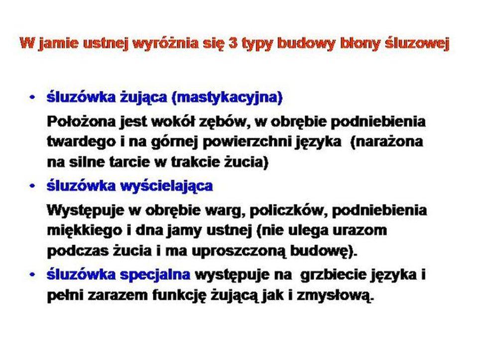 M – b.śluzowa, MM – mięsniówka b. śluzowej, S – b.