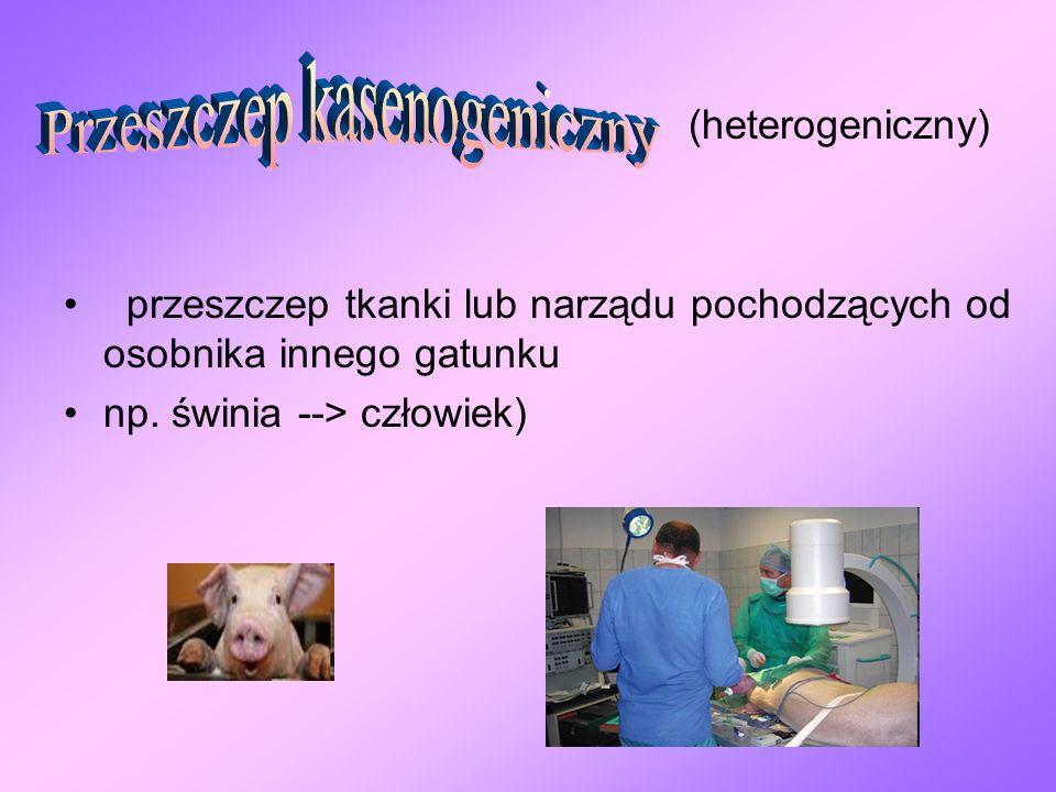 (heterogeniczny) przeszczep tkanki lub narządu pochodzących od osobnika innego gatunku np. świnia --> człowiek)