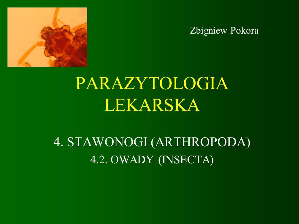 PARAZYTOLOGIA LEKARSKA 4. STAWONOGI (ARTHROPODA) 4.2. OWADY (INSECTA) Zbigniew Pokora