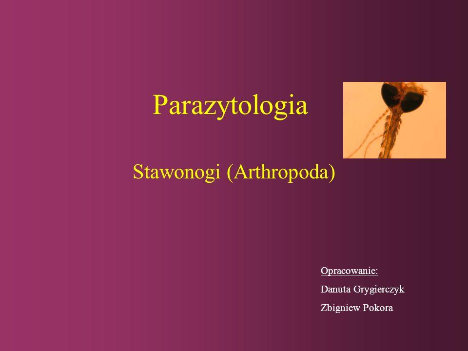 Acari: Ixodida Argas reflexus, larwaIxodes rcinus, nimfa Ixodes rcinus, osobnik dorosły Pow. 40x
