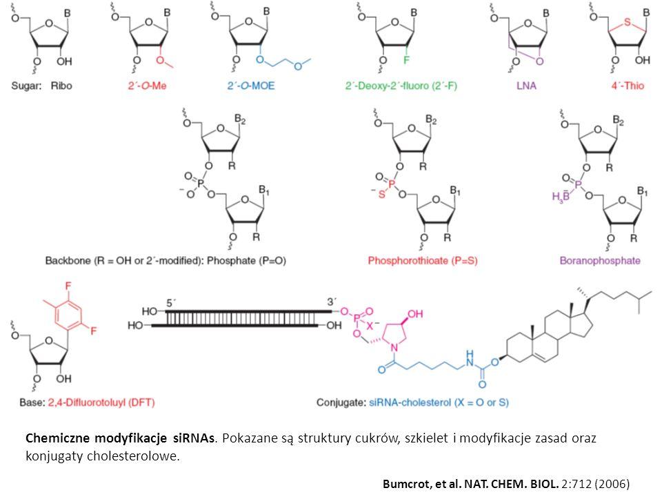 Chemiczne modyfikacje siRNAs. Pokazane są struktury cukrów, szkielet i modyfikacje zasad oraz konjugaty cholesterolowe.