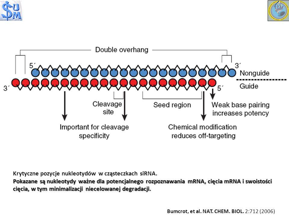 Krytyczne pozycje nukleotydów w cząsteczkach siRNA. Pokazane są nukleotydy ważne dla potencjalnego rozpoznawania mRNA, cięcia mRNA i swoistości cięcia