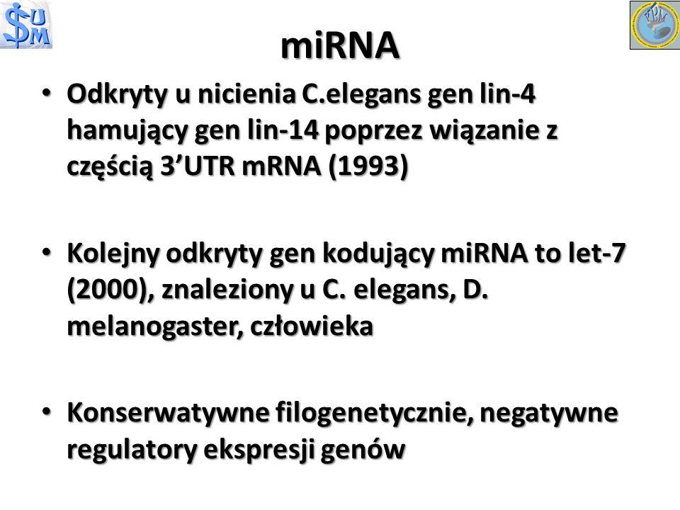 Odkryty u nicienia C.elegans gen lin-4 hamujący gen lin-14 poprzez wiązanie z częścią 3UTR mRNA (1993) Odkryty u nicienia C.elegans gen lin-4 hamujący