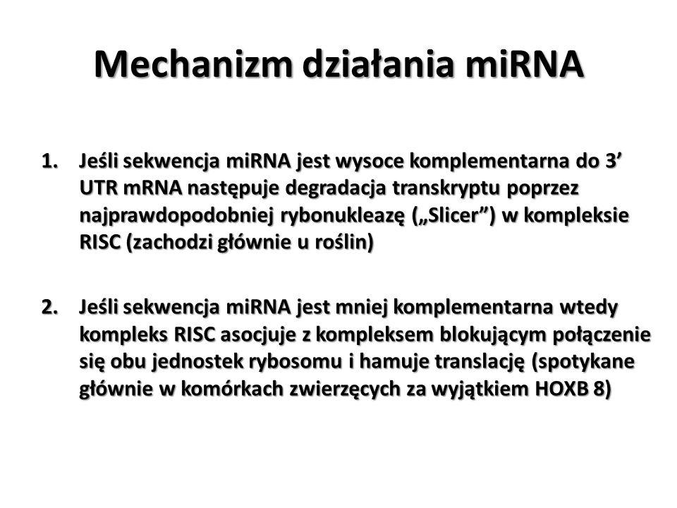 1.Jeśli sekwencja miRNA jest wysoce komplementarna do 3 UTR mRNA następuje degradacja transkryptu poprzez najprawdopodobniej rybonukleazę (Slicer) w k