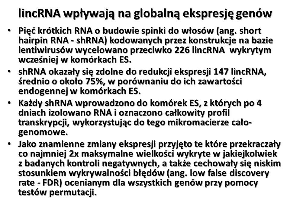lincRNA wpływają na globalną ekspresję genów Pięć krótkich RNA o budowie spinki do włosów (ang. short hairpin RNA - shRNA) kodowanych przez konstrukcj