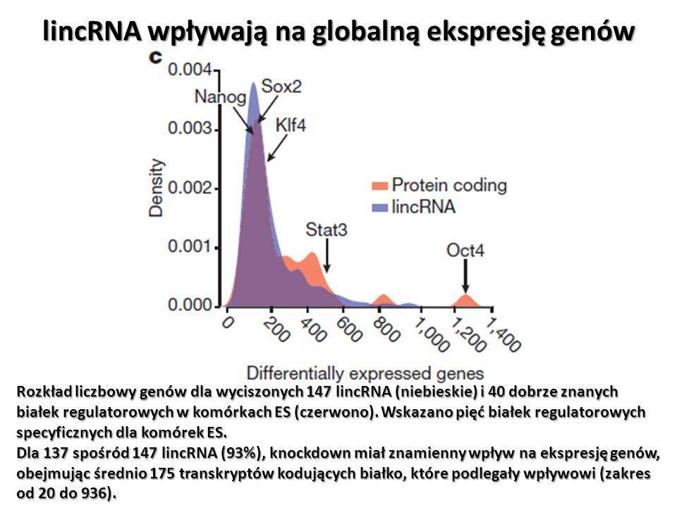 lincRNA wpływają na globalną ekspresję genów Rozkład liczbowy genów dla wyciszonych 147 lincRNA (niebieskie) i 40 dobrze znanych białek regulatorowych
