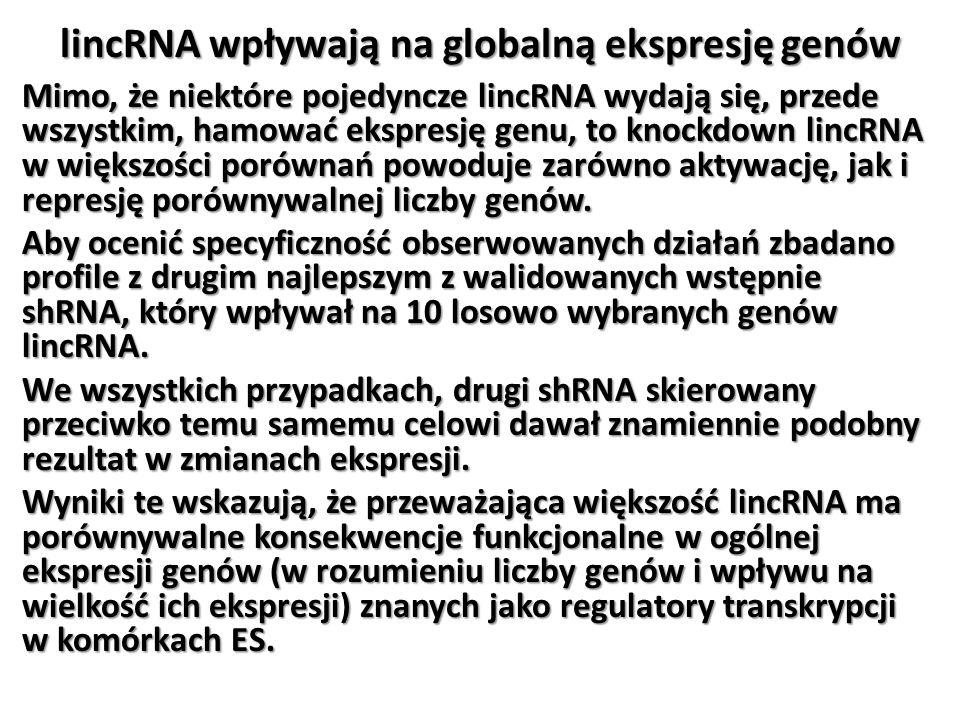 lincRNA wpływają na globalną ekspresję genów Mimo, że niektóre pojedyncze lincRNA wydają się, przede wszystkim, hamować ekspresję genu, to knockdown l