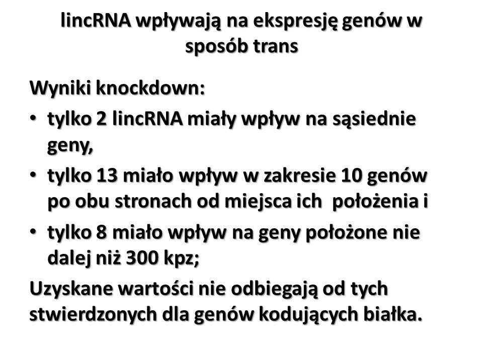 lincRNA wpływają na ekspresję genów w sposób trans Wyniki knockdown: tylko 2 lincRNA miały wpływ na sąsiednie geny, tylko 2 lincRNA miały wpływ na sąs