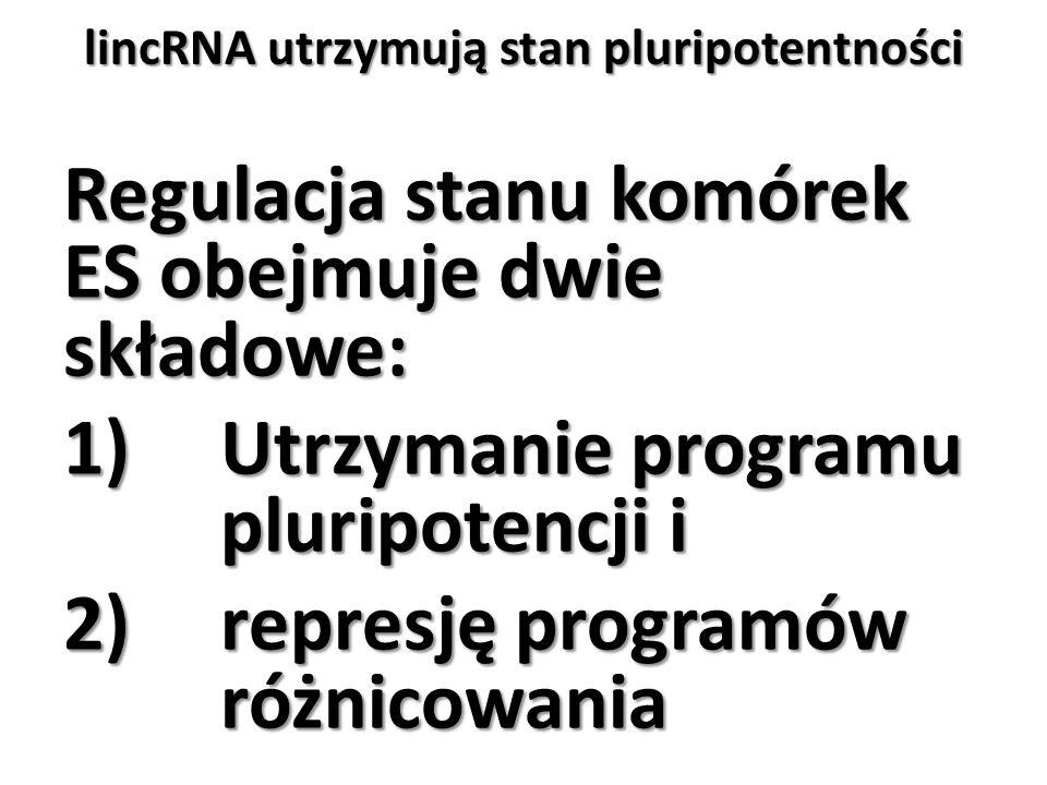lincRNA utrzymują stan pluripotentności Regulacja stanu komórek ES obejmuje dwie składowe: 1)Utrzymanie programu pluripotencji i 2)represję programów