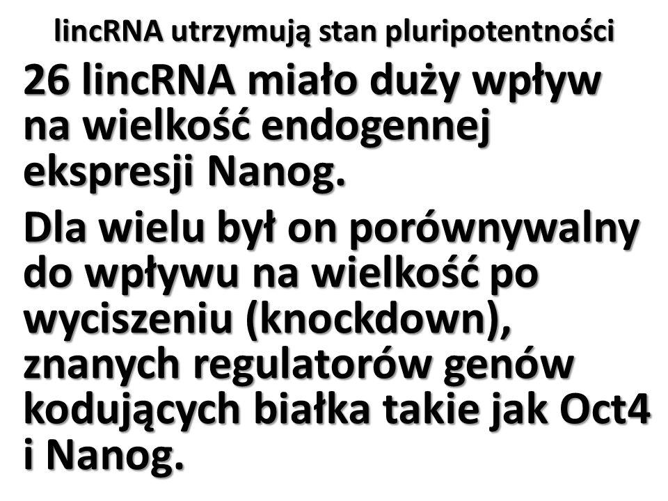 lincRNA utrzymują stan pluripotentności 26 lincRNA miało duży wpływ na wielkość endogennej ekspresji Nanog. Dla wielu był on porównywalny do wpływu na