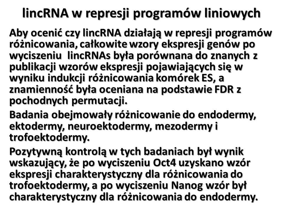 lincRNA w represji programów liniowych Aby ocenić czy lincRNA działają w represji programów różnicowania, całkowite wzory ekspresji genów po wyciszeni