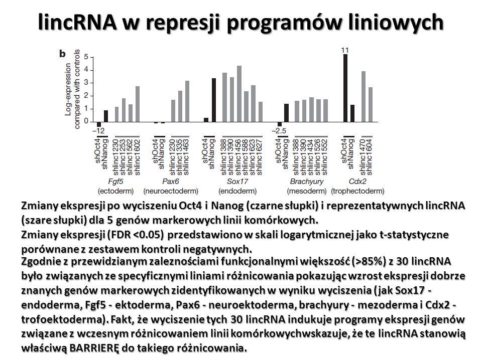 lincRNA w represji programów liniowych Zmiany ekspresji po wyciszeniu Oct4 i Nanog (czarne słupki) i reprezentatywnych lincRNA (szare słupki) dla 5 ge
