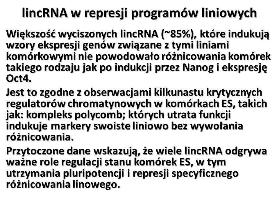 lincRNA w represji programów liniowych Większość wyciszonych lincRNA (~85%), które indukują wzory ekspresji genów związane z tymi liniami komórkowymi