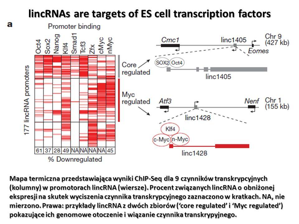lincRNAs are targets of ES cell transcription factors Mapa termiczna przedstawiająca wyniki ChIP-Seq dla 9 czynników transkrypcyjnych (kolumny) w prom