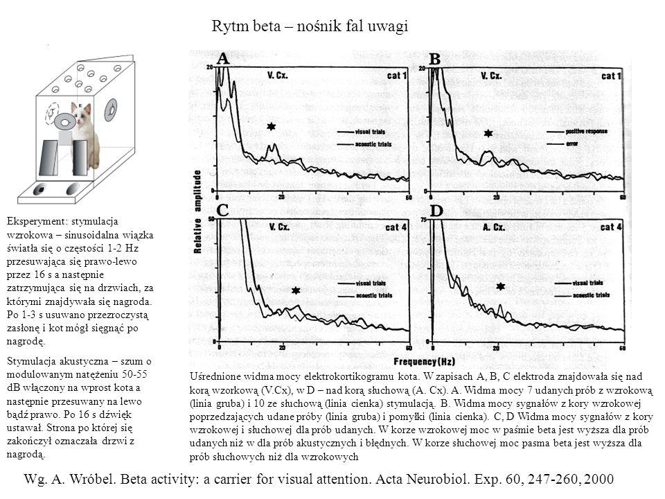 Rytm beta – nośnik fal uwagi Uśrednione widma mocy elektrokortikogramu kota. W zapisach A, B, C elektroda znajdowała się nad korą wzorkową (V.Cx), w D