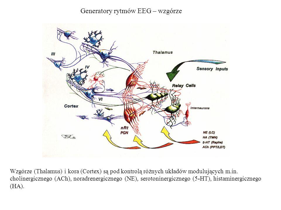 Generatory rytmów EEG – wzgórze Wzgórze (Thalamus) i kora (Cortex) są pod kontrolą różnych układów modulujących m.in. cholinergicznego (ACh), noradren
